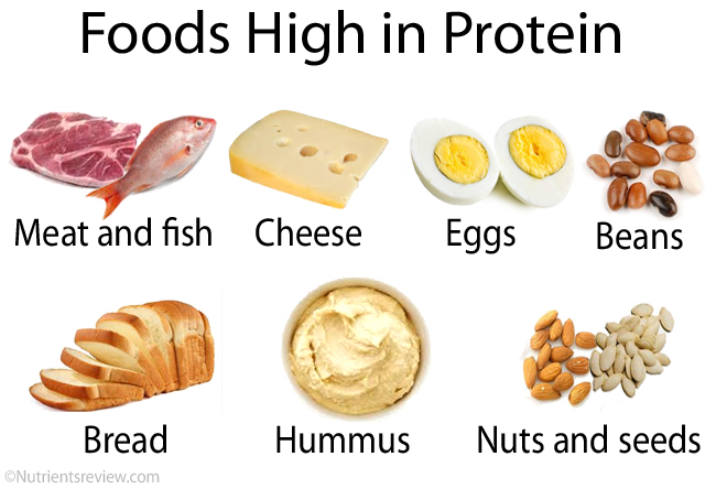High Protein Nutrition Foods